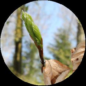 Buche, Waldverein, Bassersdorf, Nürensdorf, Kanton Zürich, Kloten, Baltenswil, Hardwald, Wald, Naturschutz, Ausflug, Wald, Freizeit