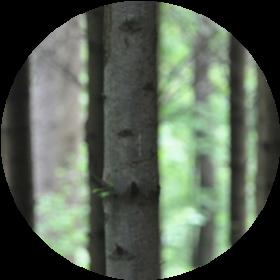 Fichten, Ausflug, Wald, Freizeit, Waldverein, Bassersdorf, Nürensdorf, Kanton Zürich, Kloten, Baltenswil, Hardwald, Wald, Naturschutz